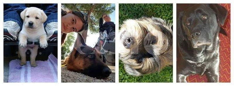Dog sitting Assisi, visitare la città con i cani grazie a Francesca e Giada