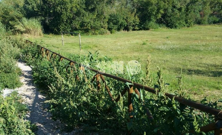 Troppe erbacce al percorso verde Assisi: la denuncia di un cittadino