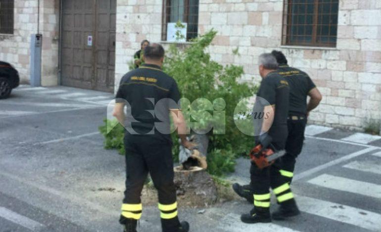 Incendi e piante pericolanti: pompieri di Assisi in azione