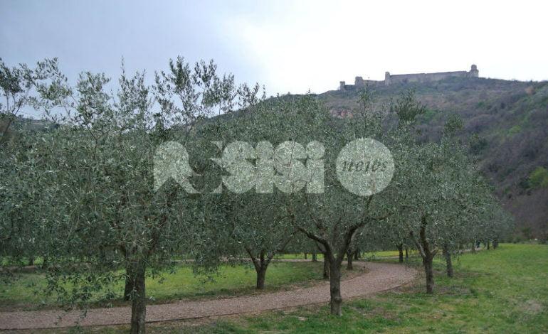 Iniziativa Halloween al Bosco Fai: nessun patrocinio del Comune di Assisi