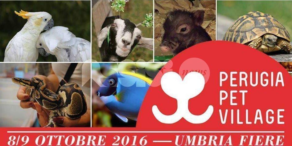 Perugia Pet Village 2016, tanti appuntamenti a Bastia Umbra
