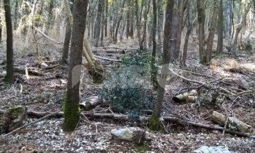 Parco del Monte Subasio - Rocca Minore, degrado e incuria: le foto