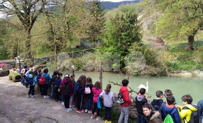 Gli alunni della Sant'Antonio in visita al Mulino Buccilli a Spello (foto)