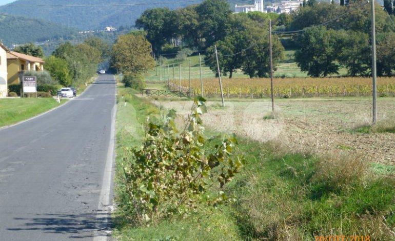 Claudia Travicelli chiede alla Provincia attenzione per la strada di Campiglione
