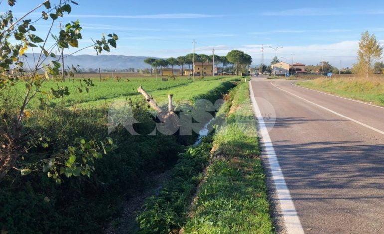 Rimosso l'albero schiantato dal maltempo tra Santa Maria e Bastia