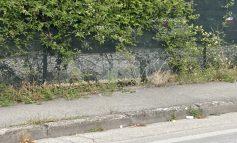 """Vegetazione in crescita in varie zone, Travicelli: """"Serve anche buona manutenzione"""""""