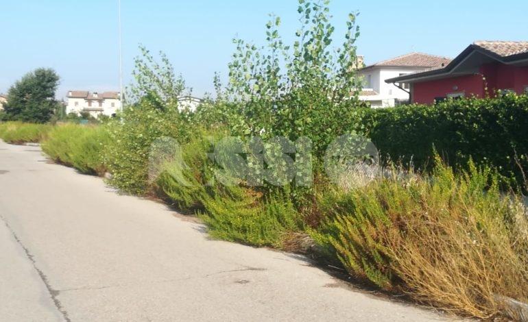 Campo Grande a Petrignano, la vegetazione la fa da padrona (foto)