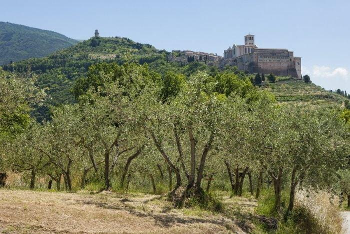 Fascia Olivata Assisi Spoleto, giovedì la visita della delegazione Fao