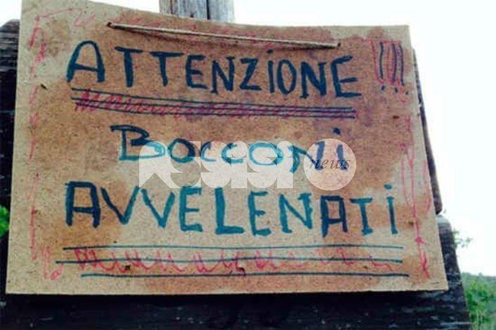 Cani avvelenati, allarme a Viole di Assisi: due casi in pochi giorni