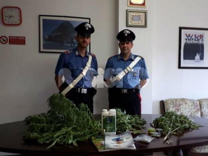 Bastia Umbra, due giovani denunciati per coltivazione di marijuana