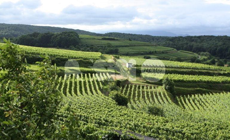 ViniVeri Assisi 2018, in Umbria – e in città – oltre 200 etichette di Vino
