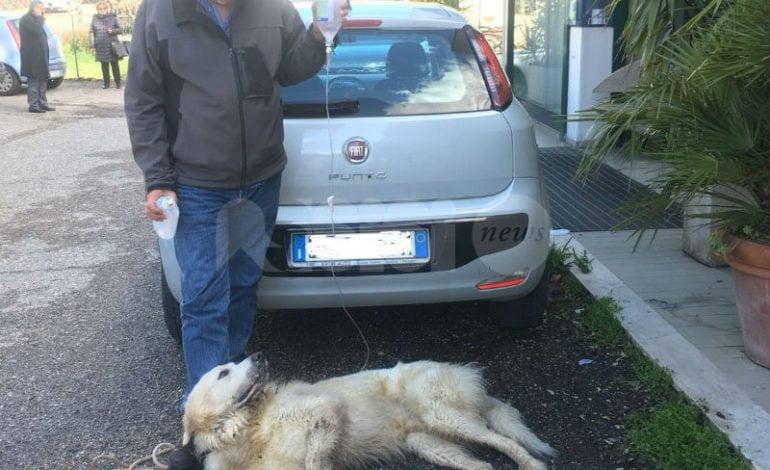Cani avvelenati, è allarme ad Assisi: tre casi in 7 giorni, esplode la protesta