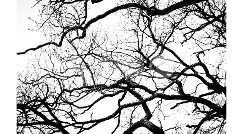 Un albero ascolta, ad Alberi di maggio la mostra fotografica di Andrea Cova