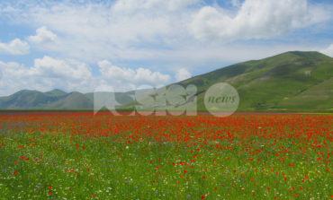 L'1 luglio 2018 una gita a Castelluccio per vedere la fiorita: come prenotarsi