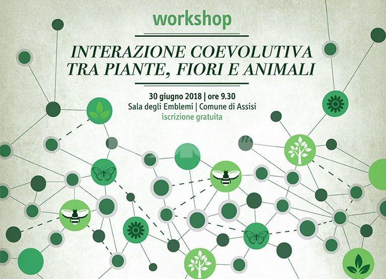 Ad Assisi il 30 giugno il workshop Interazione coevolutiva tra piante, fiori e animali