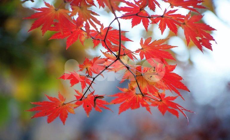 Al Convitto Nazionale di Assisi il concerto Foglie d'autunno