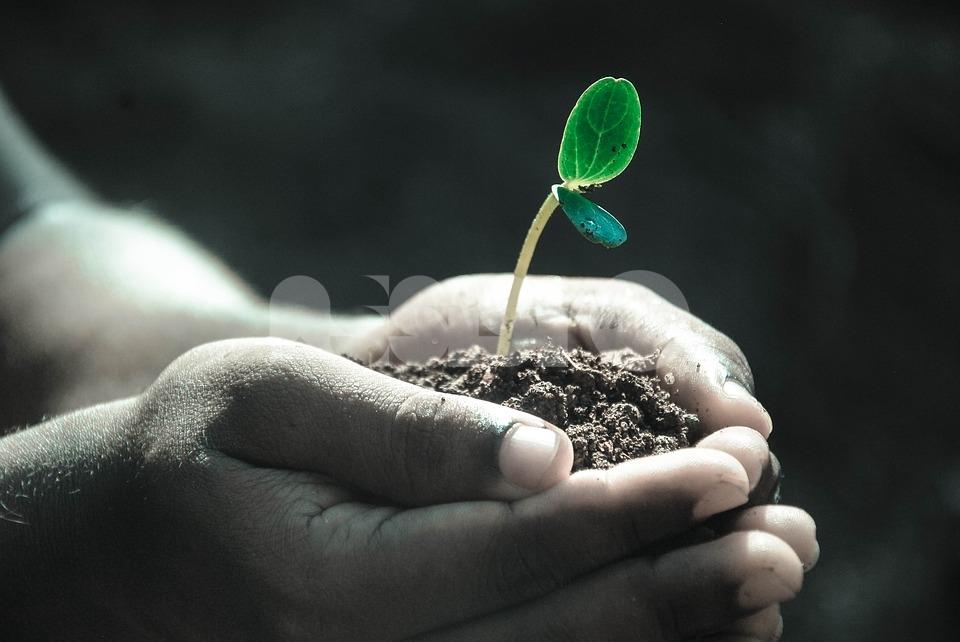 """Giornata mondiale del suolo 2019, ad Assisi il convegno """"Dalla terra alla Terra"""""""