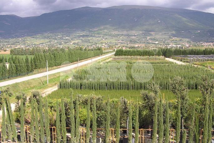 Umbraflor, i sindaci di Assisi, Cannara e Spello chiedono un incontro in Regione