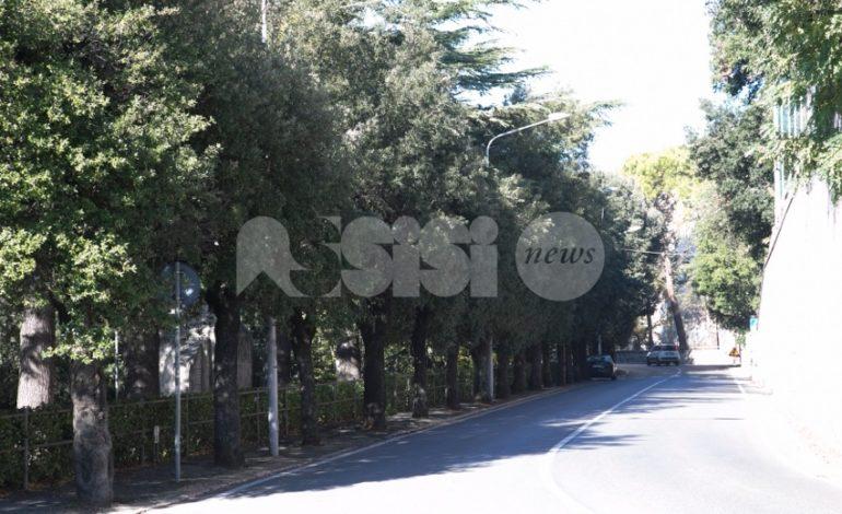 Riqualificazione del patrimonio arboreo, la giunta di Assisi stanzia 300.000 euro