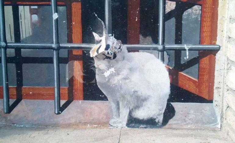 Vandalizzato il trompe-l'oeil Il Gatto Bianco di Claudio Fronza: le foto
