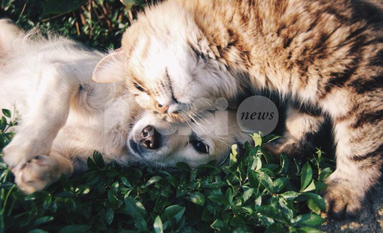 Veterinario gratis per cani e gatti adottati, in Umbria legge operativa da fine giugno