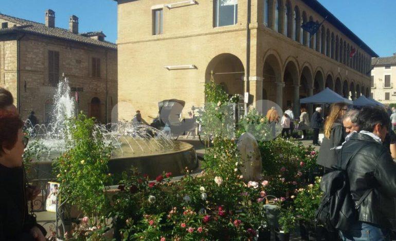 Le Rose per Dono 2019, dal 26 al 28 aprile a Santa Maria torna la mostra florovivaistica