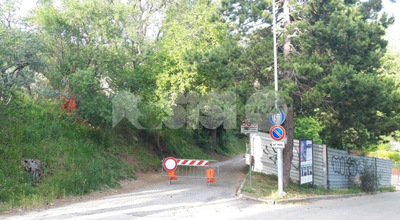 Quercia caduta in via Perosi, strada chiusa da 20 giorni: l'albero è ancora lì