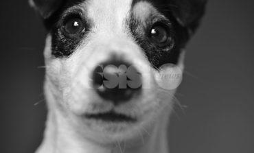 AssisiNews contro l'abbandono degli animali nell'estate 2019