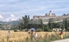 I campi di grano con vista su Assisi come la piana di Castelluccio