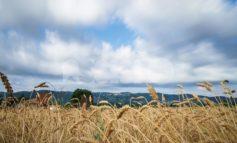 Progetto Terre di Bettona, il 25 luglio il tradizionale incontro con gli esperti