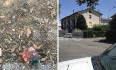 Bocconi avvelenati, torna l'allarme a Santa Maria degli Angeli