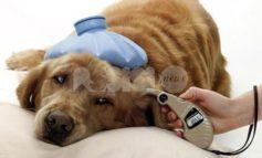 Quattro zampe, caldo e salute: colpo di calore nel cane, cosa fare