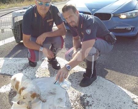 La Polizia Stradale di Perugia salva un cagnolino lungo la E45 (foto)