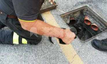 Gatto salvato dai vigili del fuoco: era incastrato in una canalina