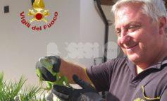 Un'iguana in giardino a Bastia Umbra: salvata dai pompieri
