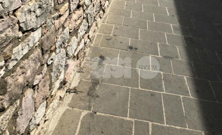 Topo morto in via del Torrione, la segnalazione (FOTO ESPLICITE)