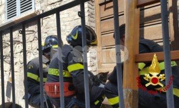 Gatto salvato dai pompieri ad Assisi, era su un cornicione (foto)