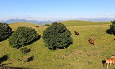 Trekking fotografico nel Parco del Monte Subasio domenica 6 ottobre 2019