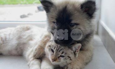 Umbria Pet 2019, a Bastia Umbra protagonisti cani e gatti