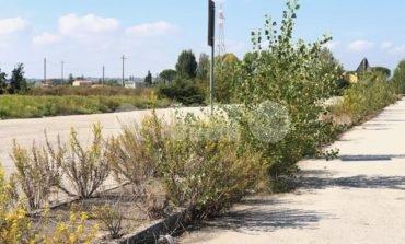 Zona industriale di Santa Maria degli Angeli: chi se ne deve prendere cura?
