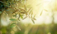 Meteo Assisi 18-20 ottobre 2019: sole e caldo, ma poi c'è l'autunno