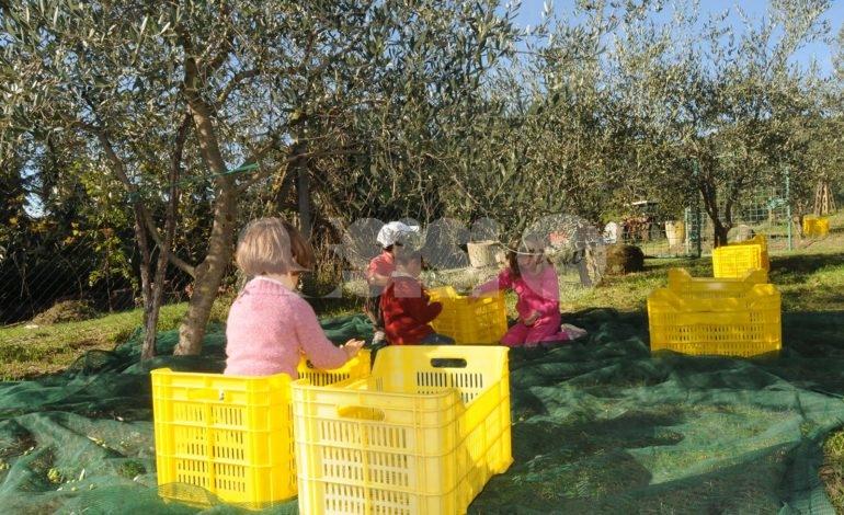 Frantoi Aperti in Umbria 2019, il programma e le date di visite e brunch