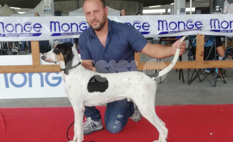 Riccardo Migno, da Bastia Umbra un allevatore da primato (foto)