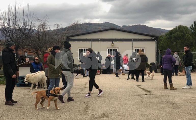 Canile intercomunale di Assisi, 38.000 euro di lascito per migliorie