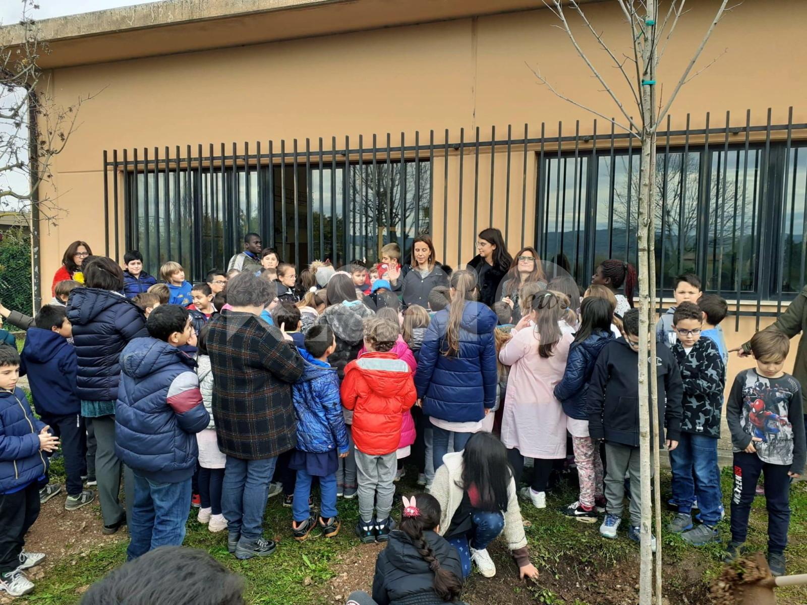Festa dell'Albero 2019, la primaria Frondini pianta due aceri nel giardino scolastico