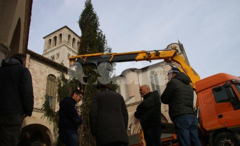Albero di Natale 2019 a San Francesco e presepe, saranno per la natura ferita