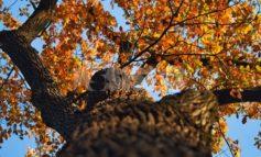 Rubano 5 quintali di legna da una quercia secolare, ma è del Comune: due cinquantenni denunciati