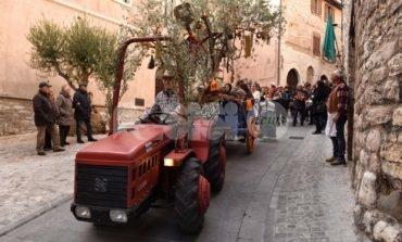 Festa dell'Olivo e Sagra della Bruschetta 2019, l'olio protagonista a Spello