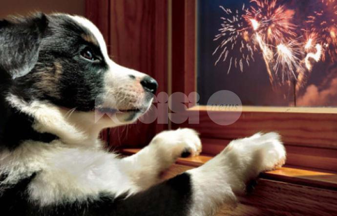 Botti di Capodanno e animali domestici: prevenzione dell'ansia da fuochi d'artificio