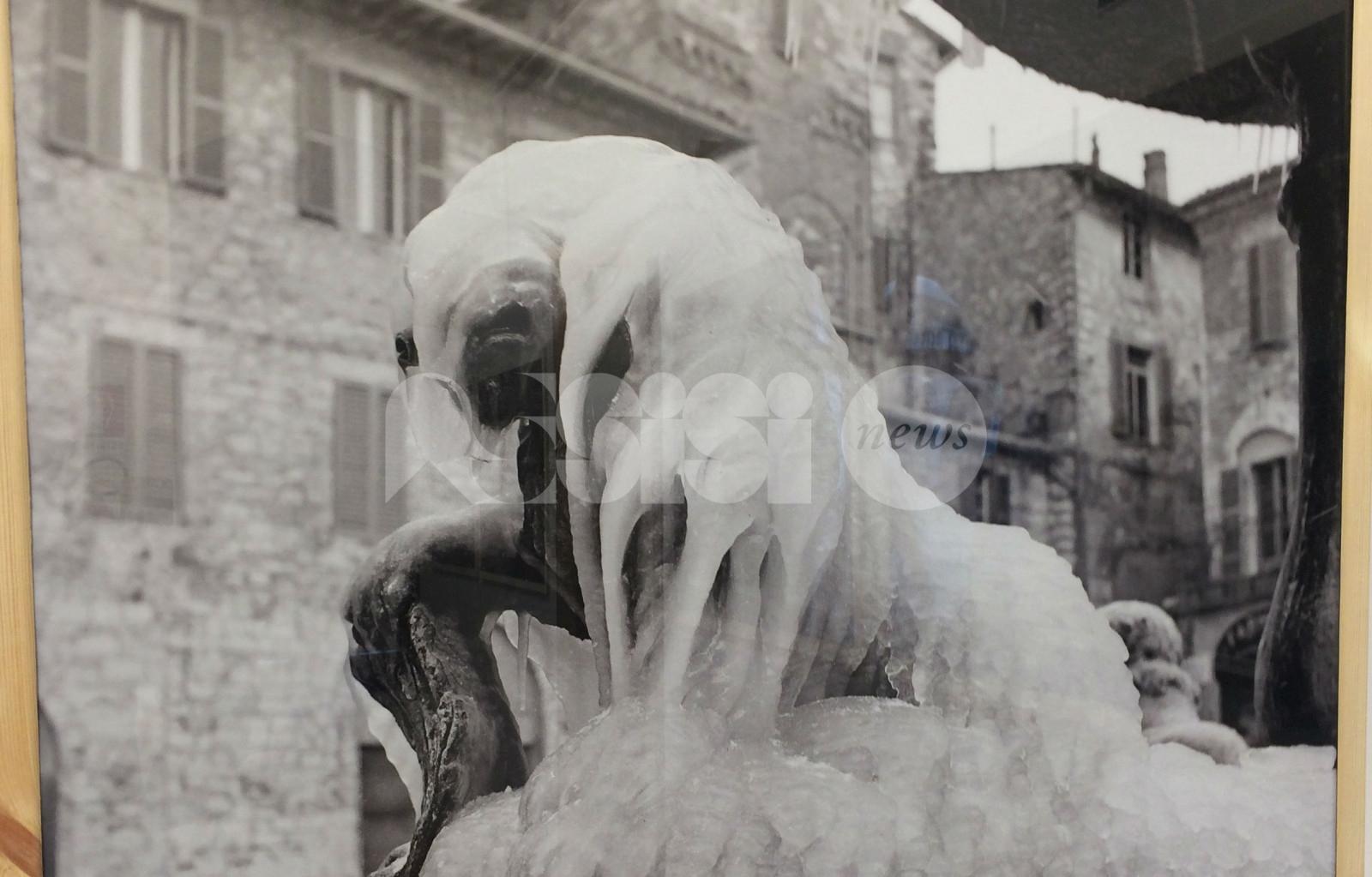 Il Leone d'inverno, le foto di Angelo Lunghi in mostra ad Assisi